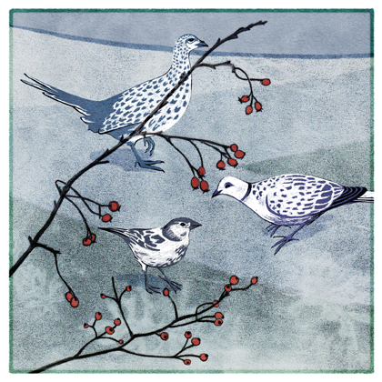 gcards-winterbirds-72dpiforweb-preview.jpg