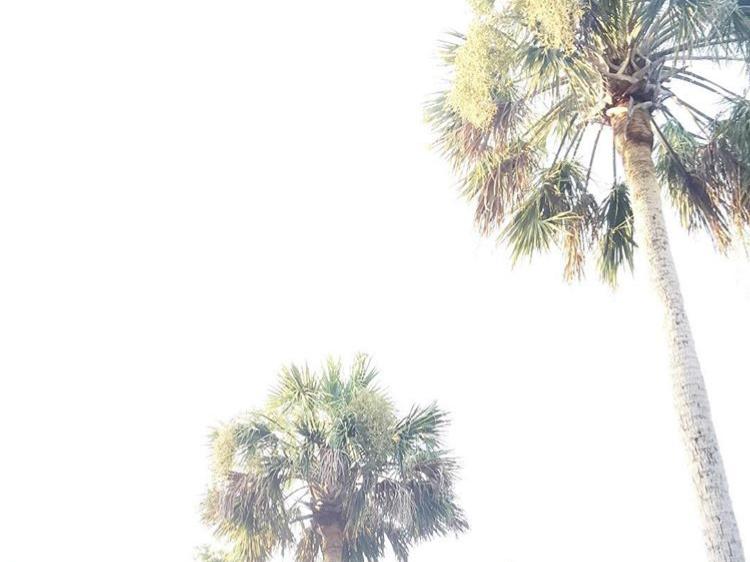 Charleston, SC — Wee Little Nomads