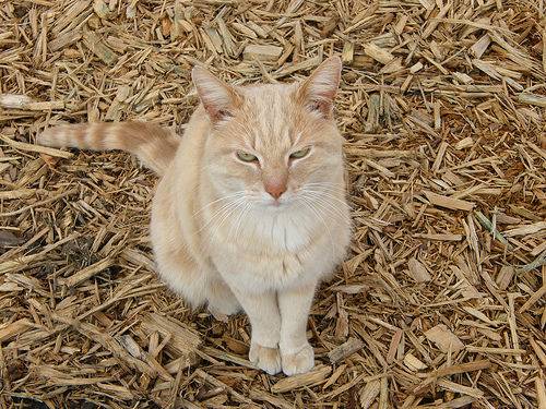 Shredded bark mulch is good for the catses too. Except they might poop in it. Free fertilizer?