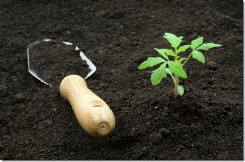 soil 5.jpg