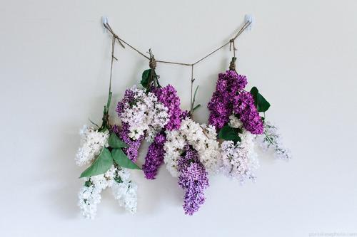 hanging lilacs