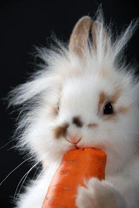 bunny carrrot.jpg