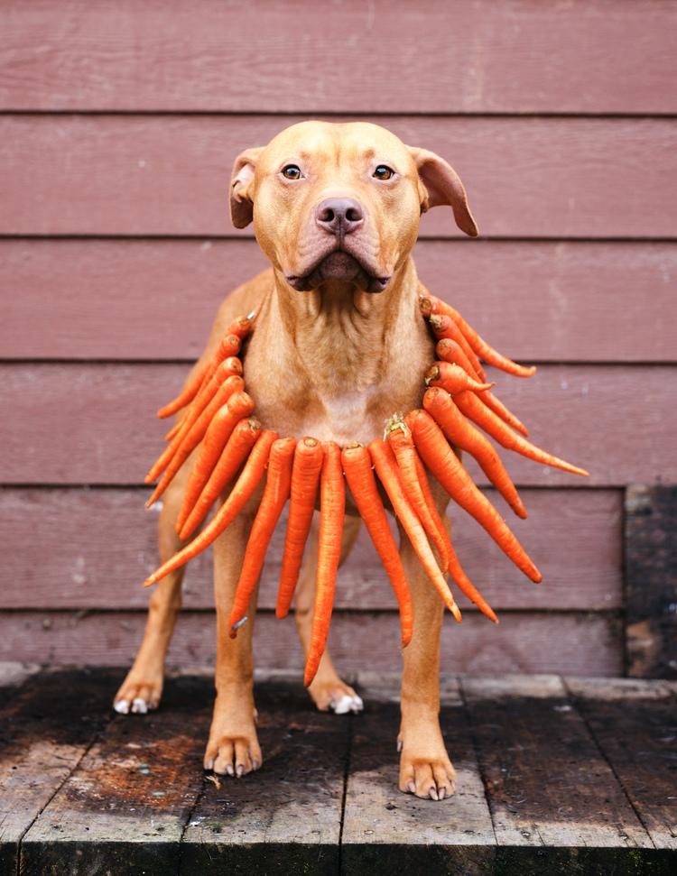 dog carrots.jpg