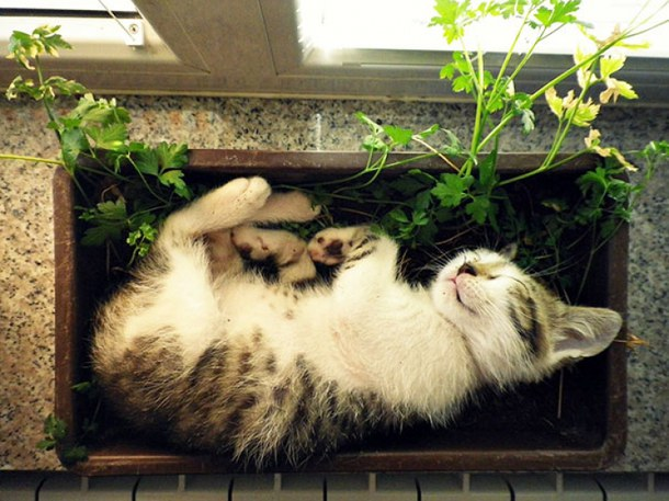 kitten herbs.jpg