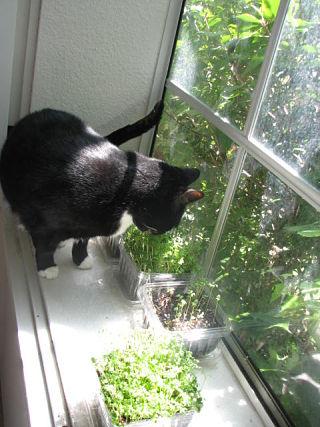 better cat micro.jpg