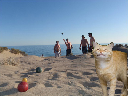 bocce with cats