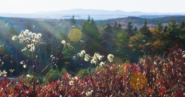 Blueberry fields when their leaves turn crimson during the autumn on Caterpillar Hill.