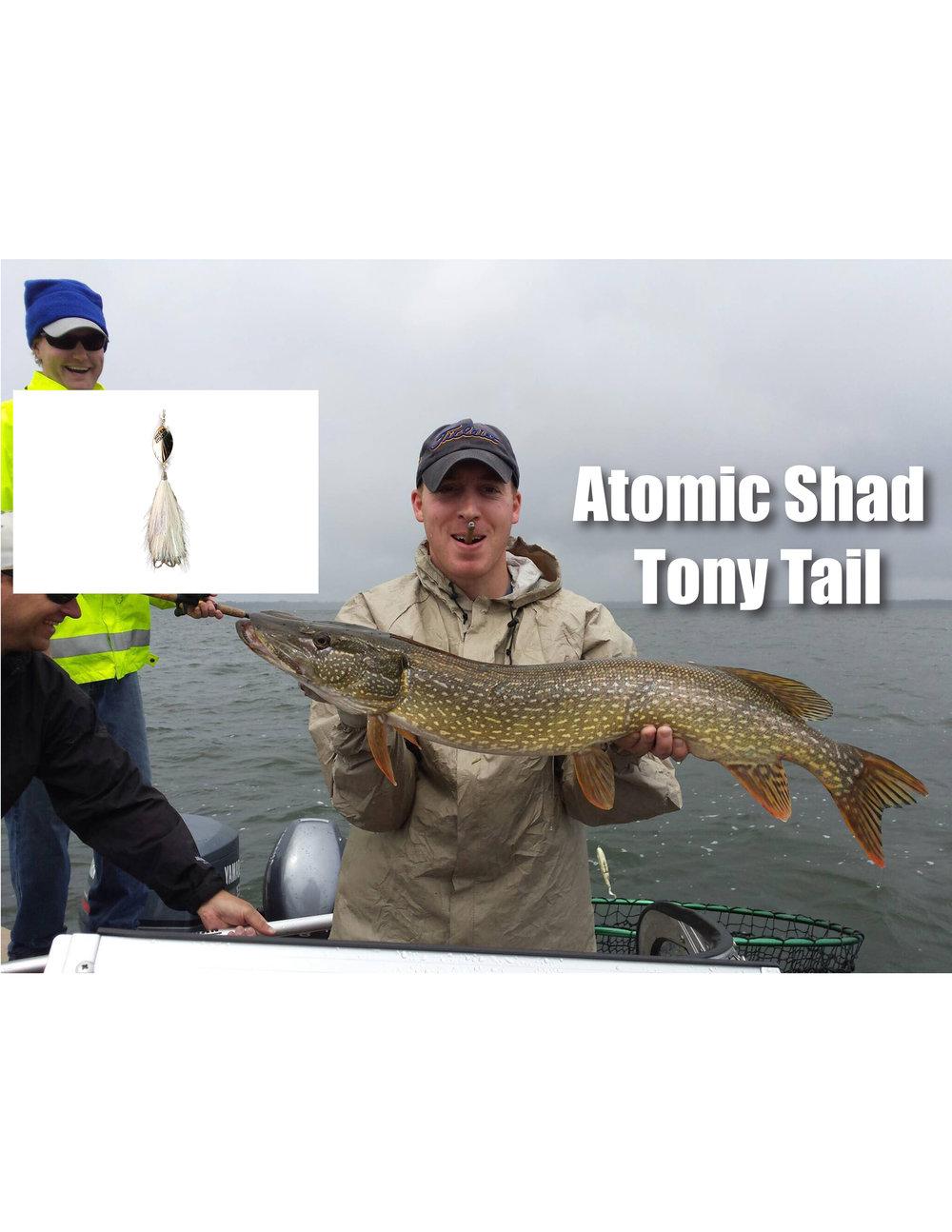 atomic shad TT.jpg