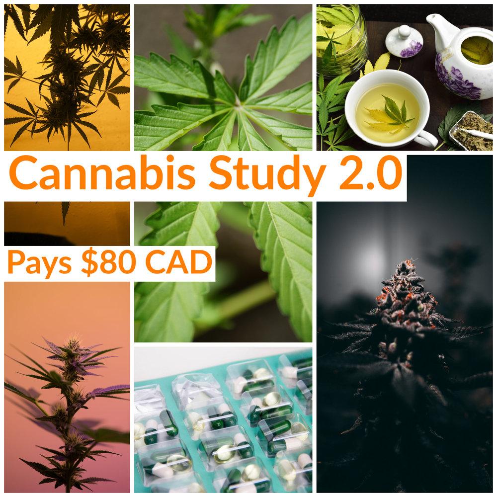 Gold & Gold Cannabis Study 2.0 (1).jpg