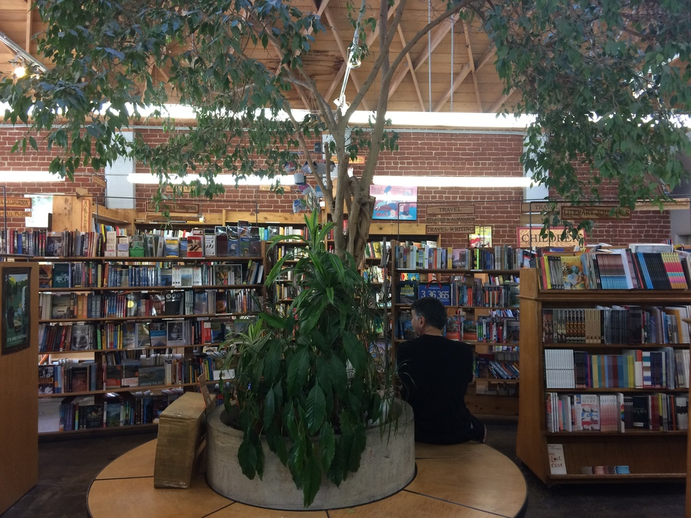 skylight_books_tree.jpg