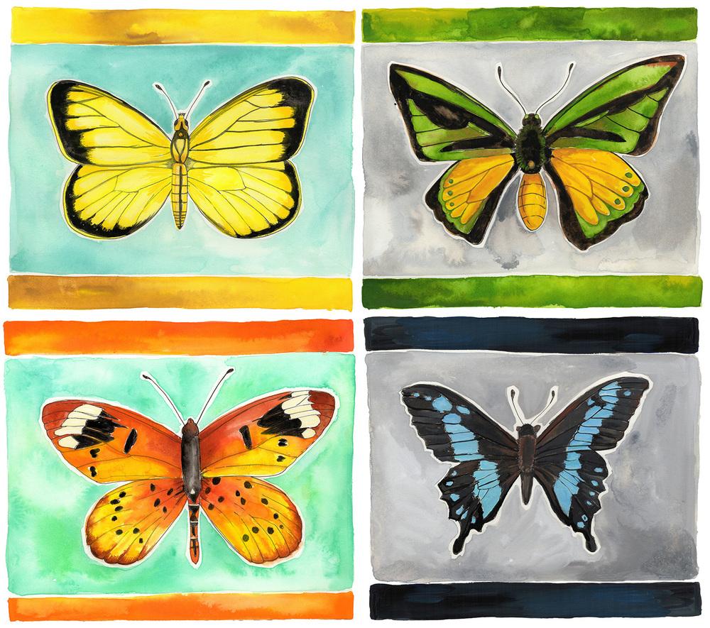Butterflies-AmyLFrazer.jpg