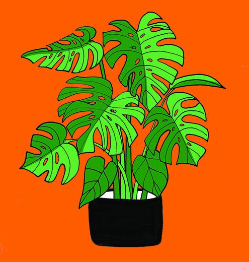 Botanical Home- Split Leaf1.jpg