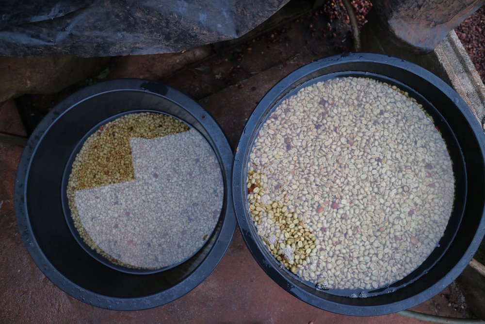Akor's post-fermentation soak tubs help his wet parchment to find moisture balance.