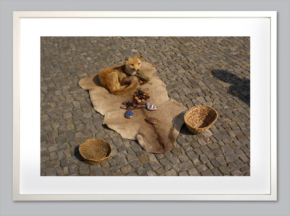 berlin-fox.jpg
