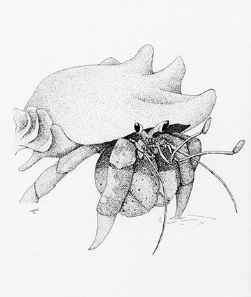 Hermit Crabw.jpg