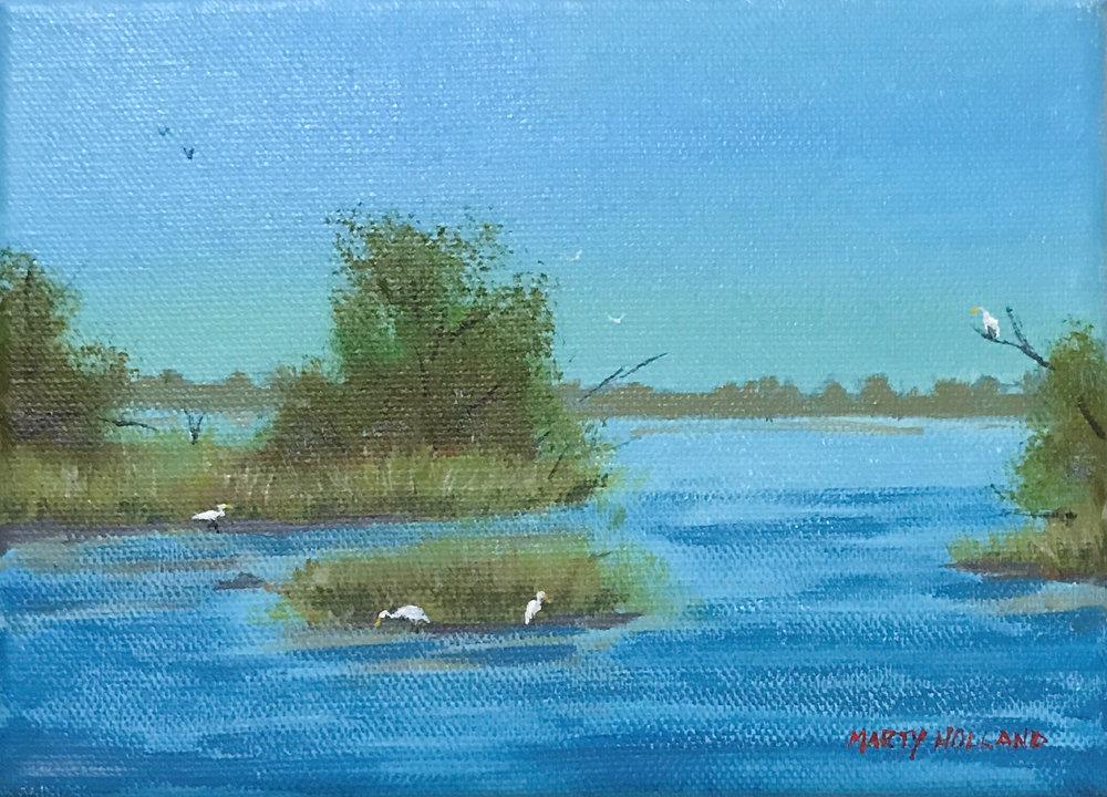 birds in a marsh.jpg