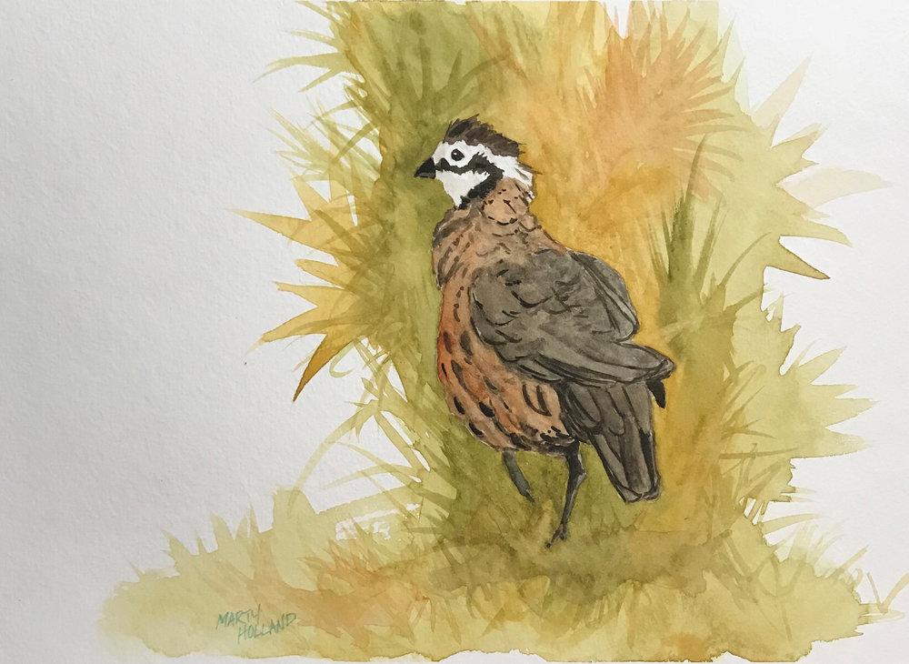 lonely quail.jpg