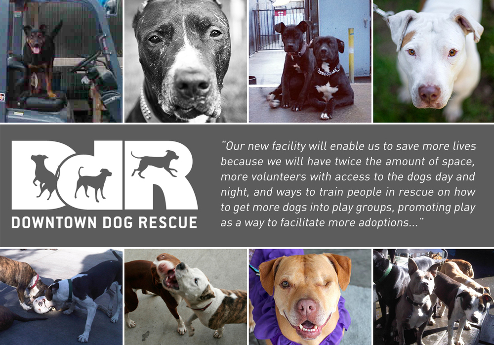 A 501c3 based in Los Angeles, DDR is changing the face of animal rescue here in California and beyond.