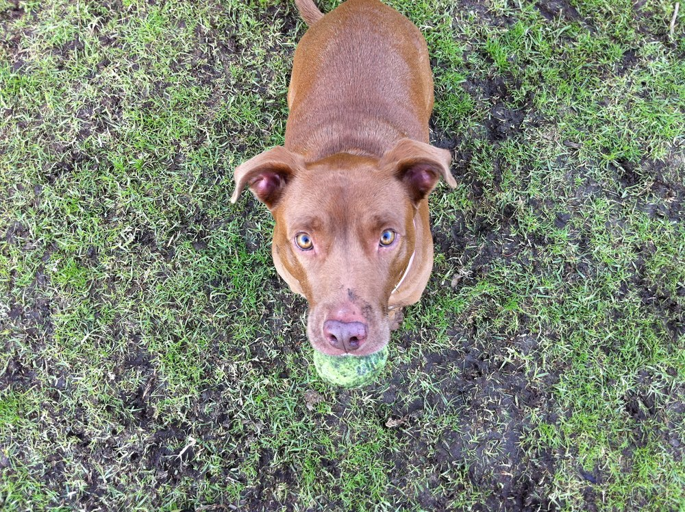 Hi, Fiona. Adopt a shelter dog, people. They'll love you (and play ball with you) forever and ever.