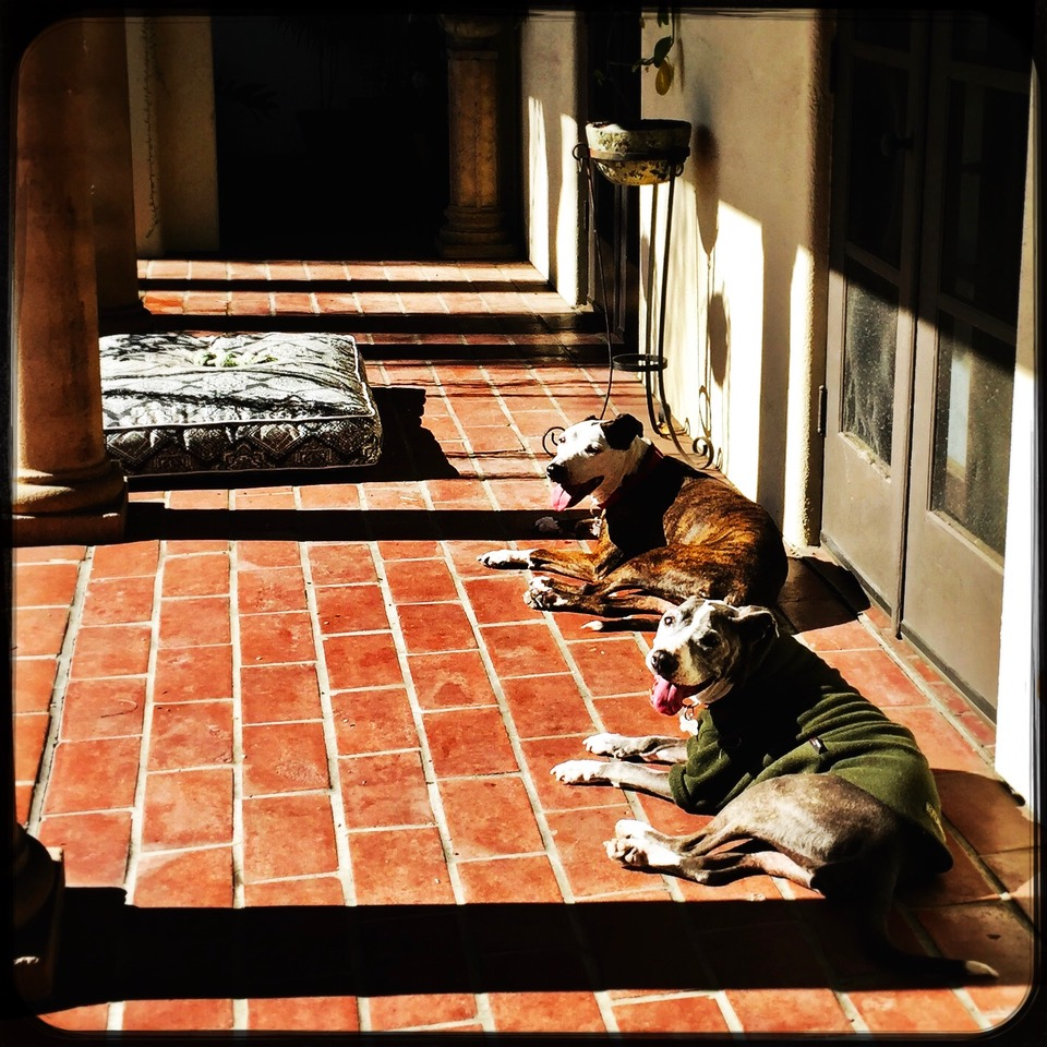 Just a coupla' cute old ladies from Los Angeles' animal shelters, enjoying their best lives.