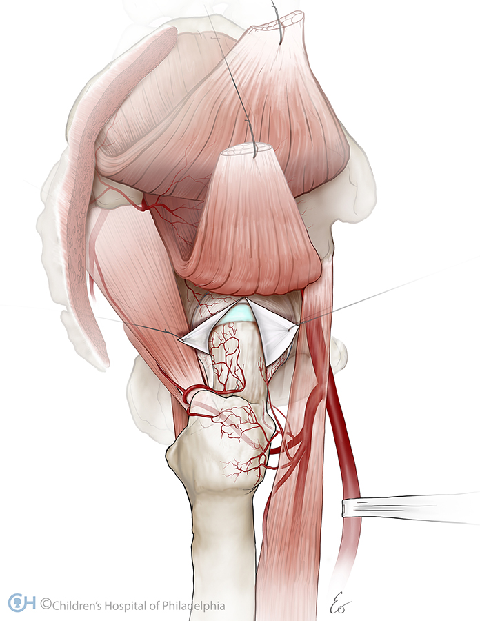 Anatomy And Physiology Eo Trueblood Medical Illustrator