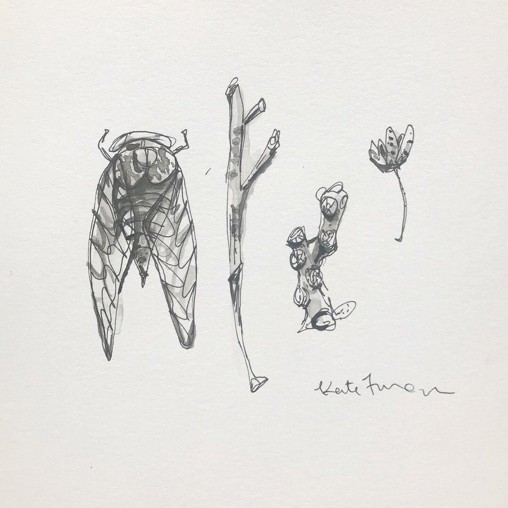 Kate Furman, Nature Inspired Sketchbooks for Kids