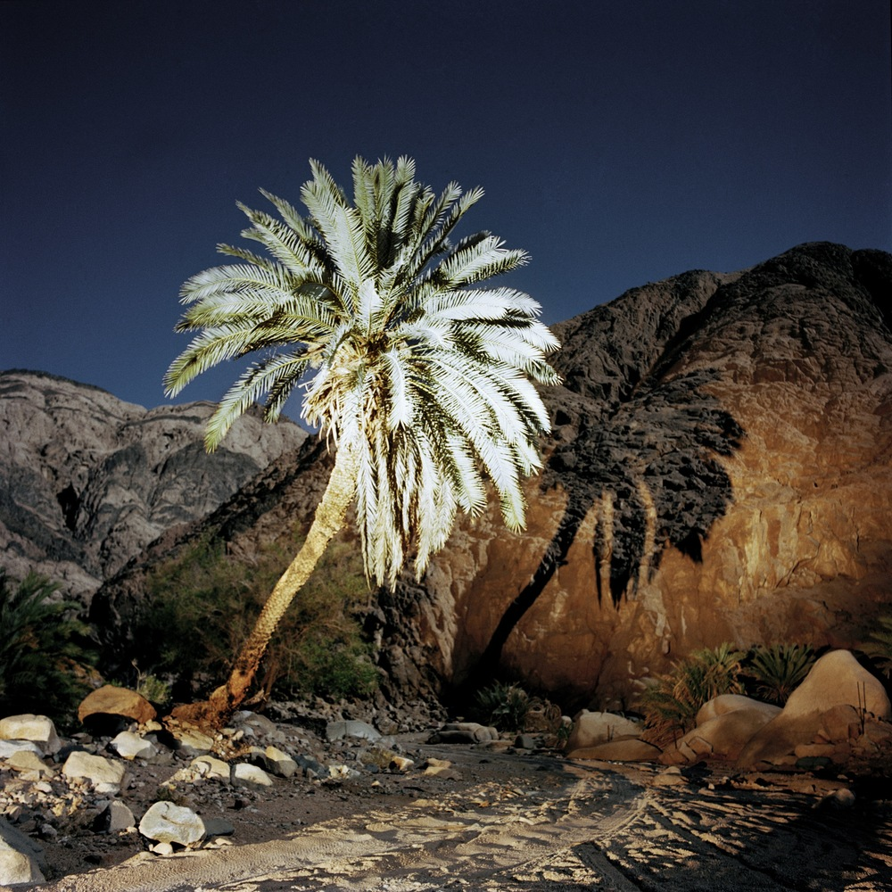Sinai, Egypt, 2004