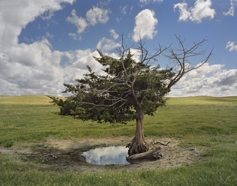 Homesteaders' Tree, Cherry County, Nebraska, 2013