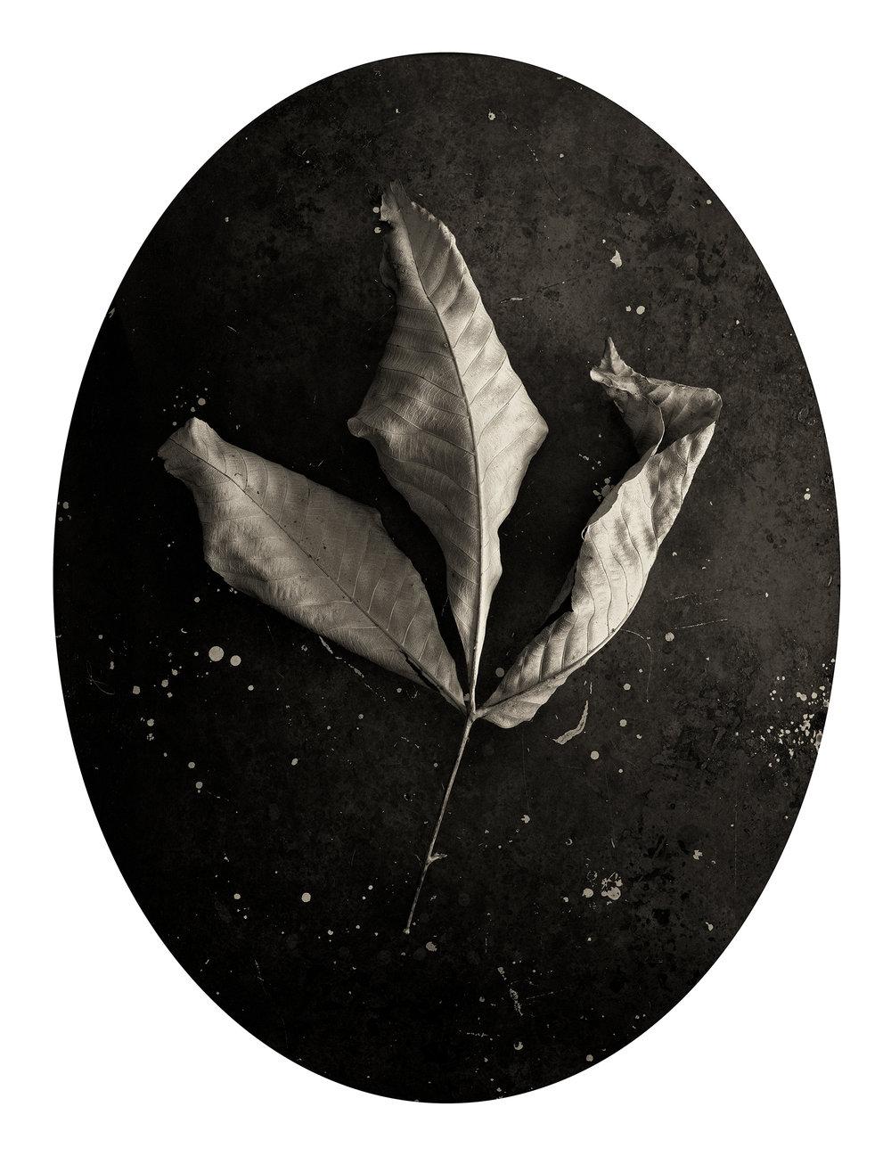 Leaf, 2002