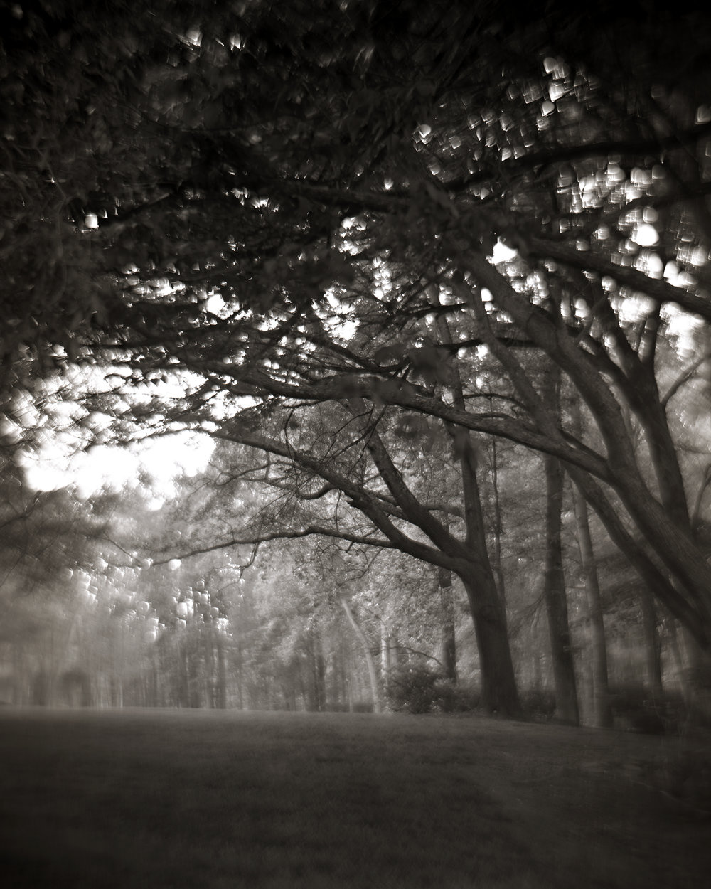Trees Bending Toward the Light, 2016