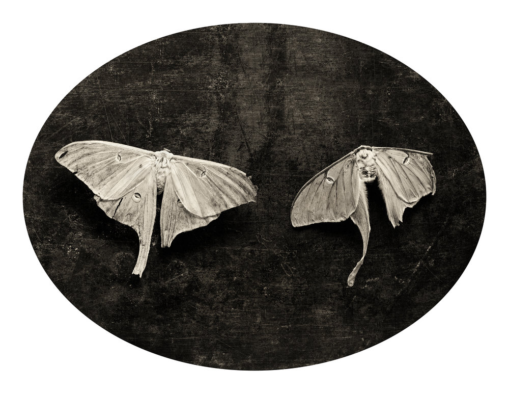 Soulmate Moths, 2003