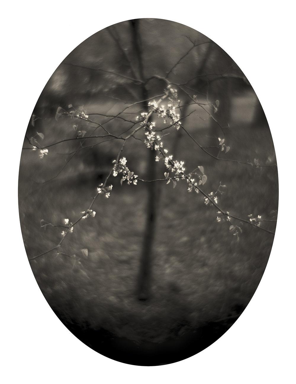 Spring, 2005