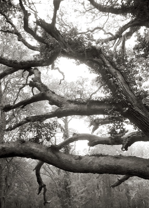 Limbs, Over 100 Years Old, 2009