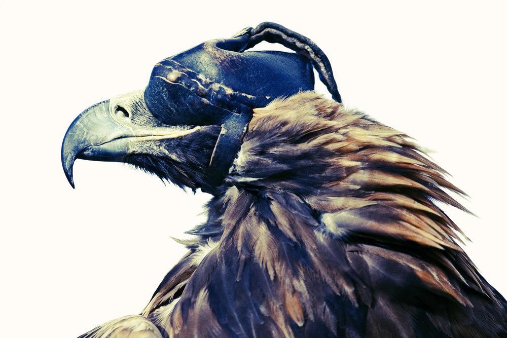 Eagle Hunter 01, 2015