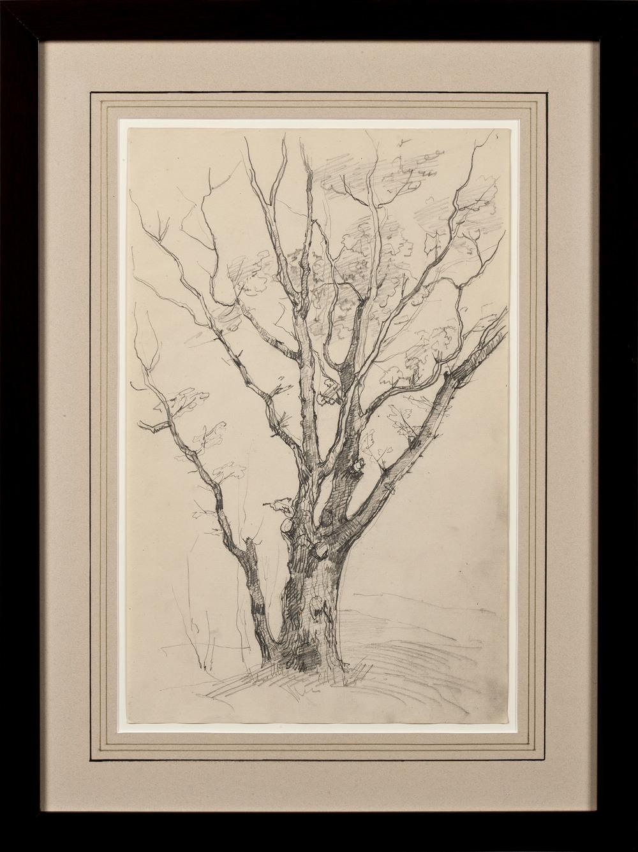 Mesdag-van Houten_Tree sketch.jpg