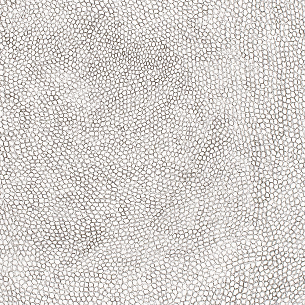 (Detail) Circle Within Large Rectangle, 2007 50 by 38 inches Graphite on paper
