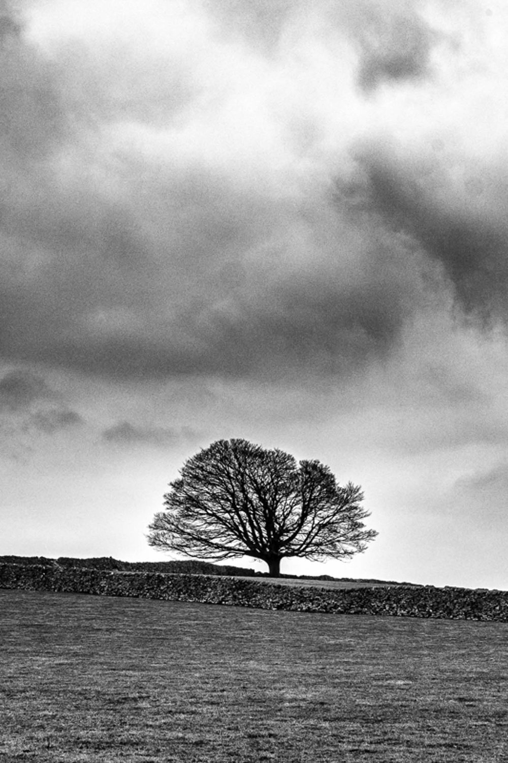 Single Tree - Peak District