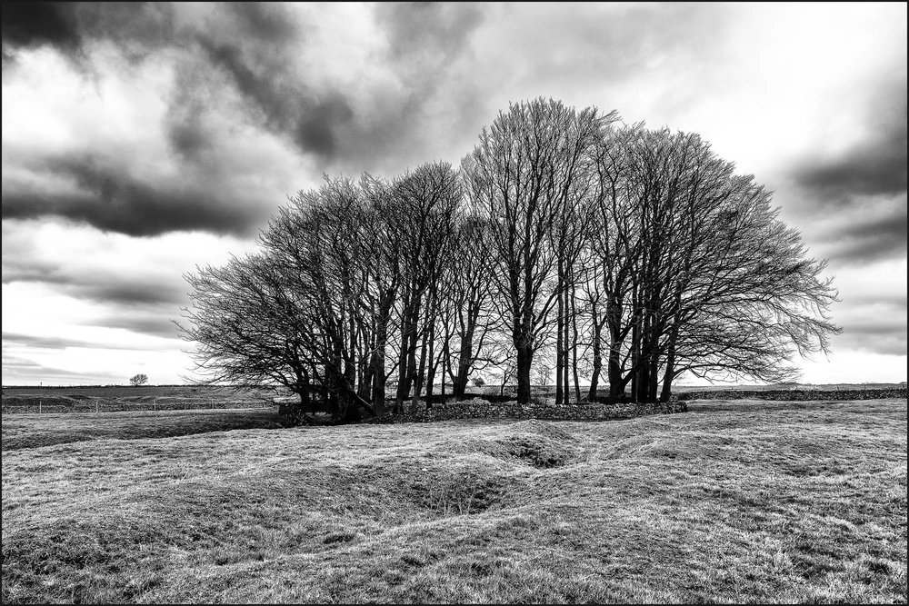 Winter Trees - Peak District