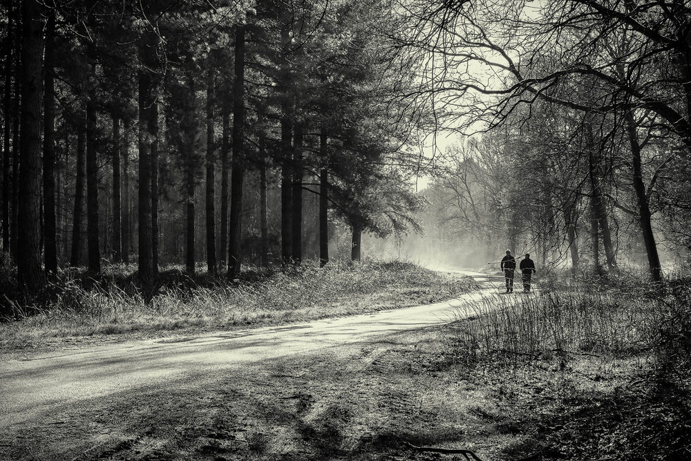 Morning walk in Thetford Forest