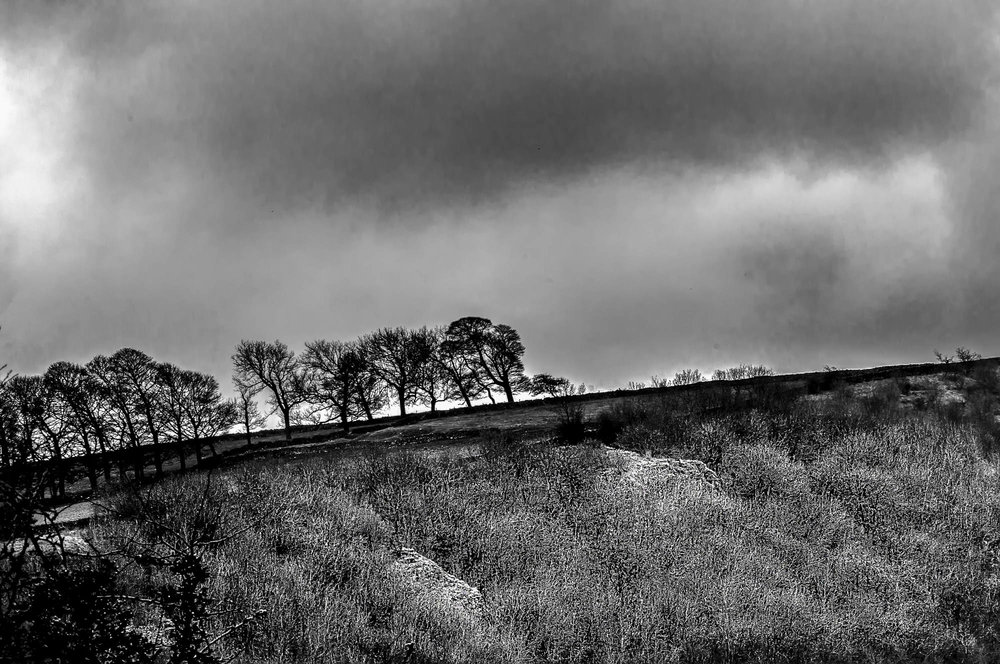 Tress on a hill - Peak District