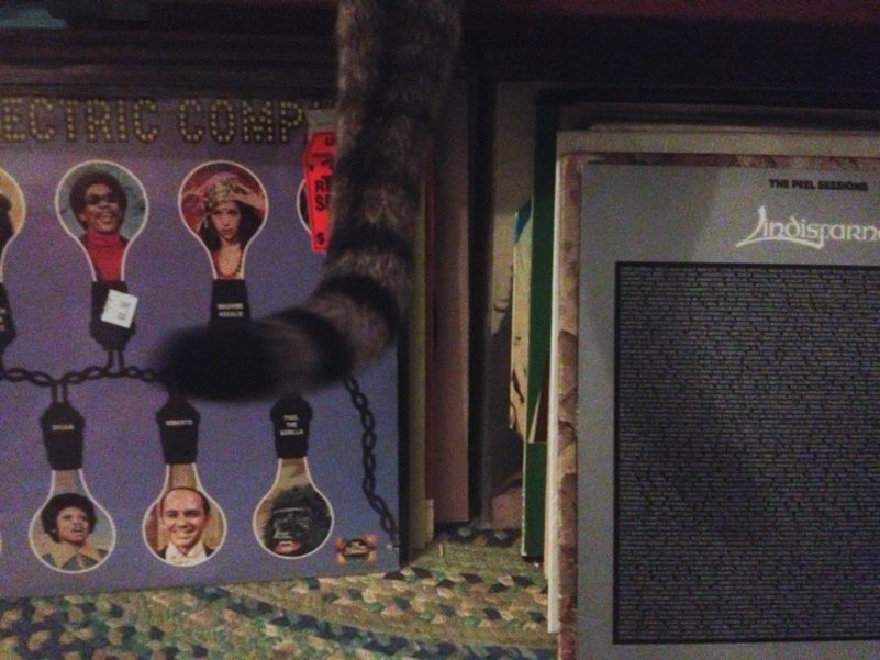 Nermal's tail, Andy's records.
