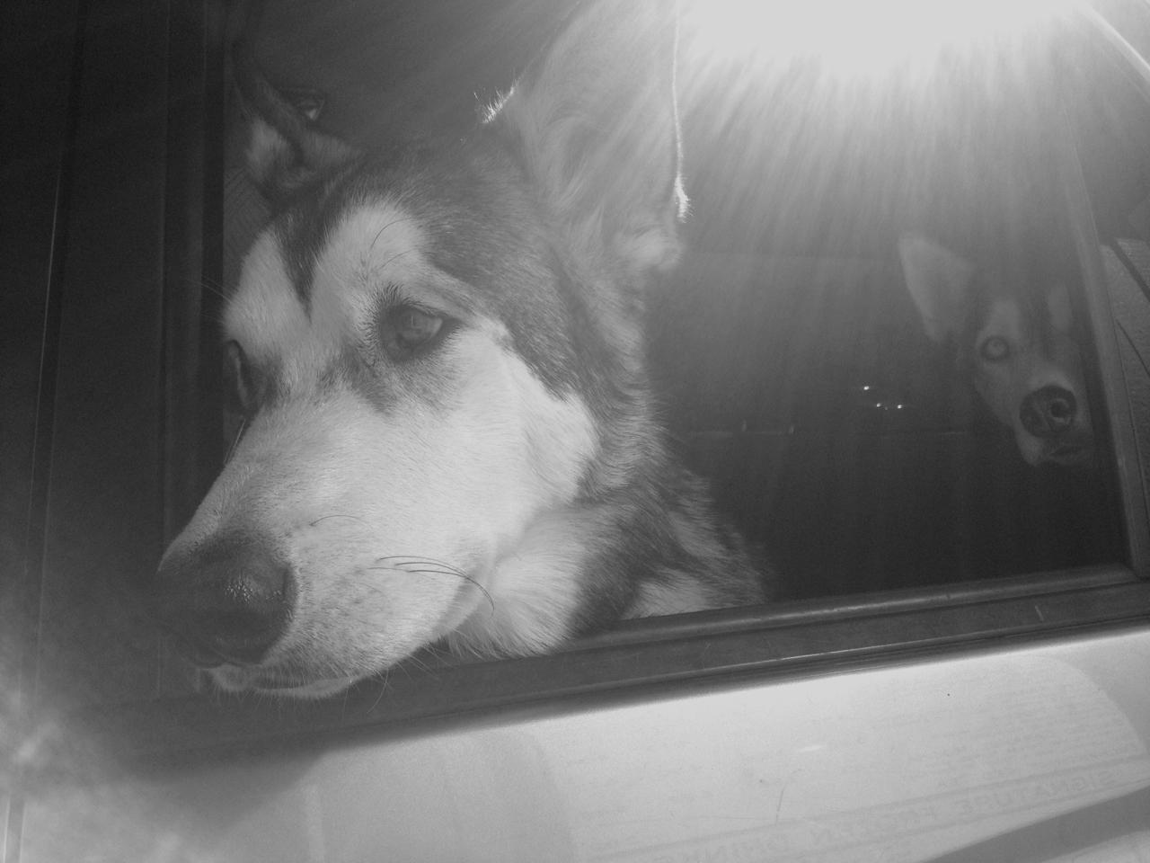 Ludo with kieska peeking through.