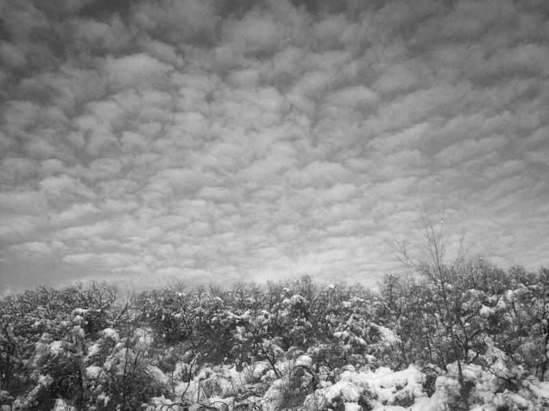 Winter sky. | Dog Park