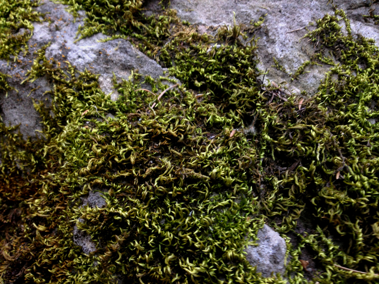 Mossy. Millcreek Canyon