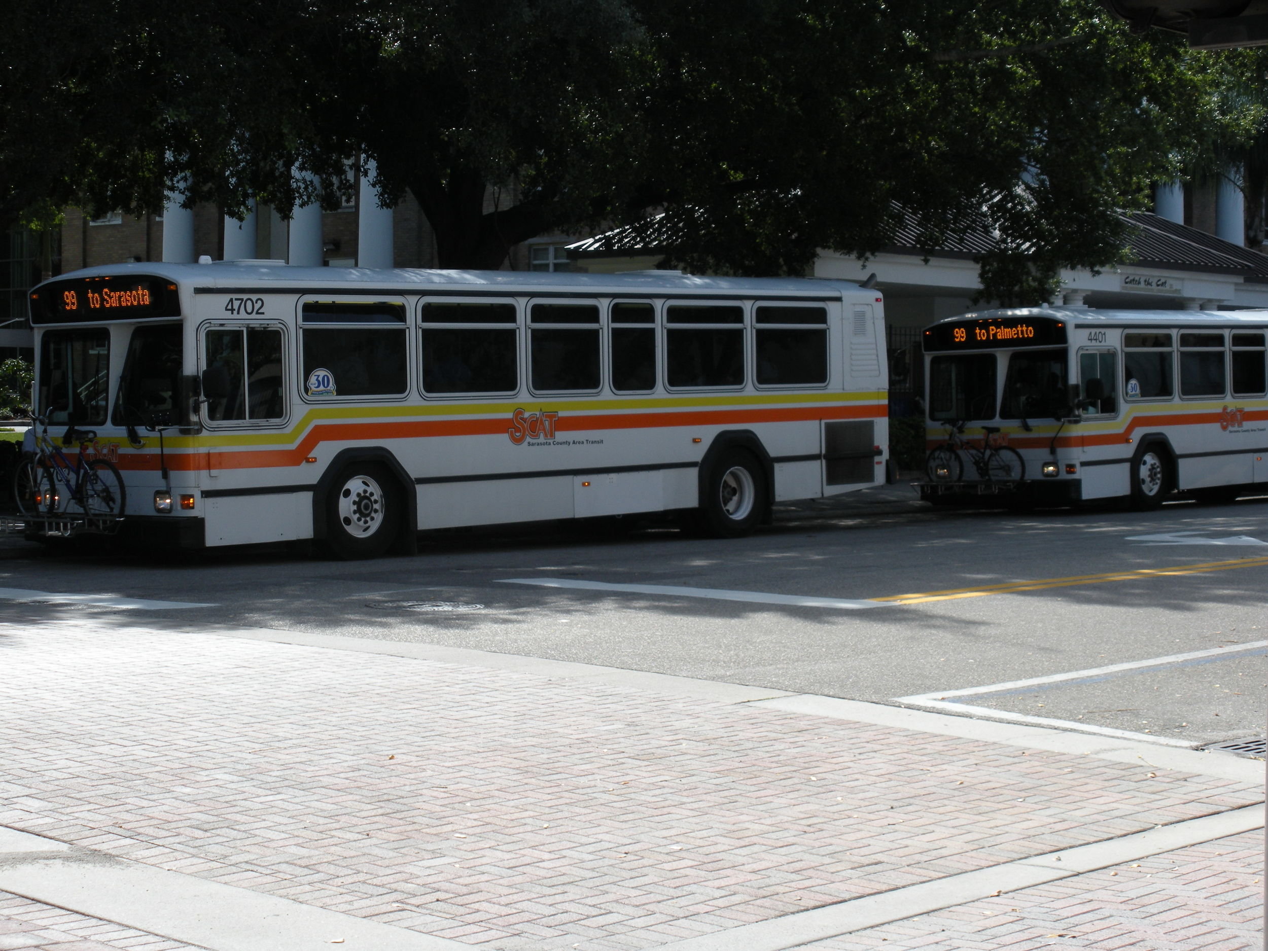 Sarasota County Route 99  buses in downtown Bradenton.