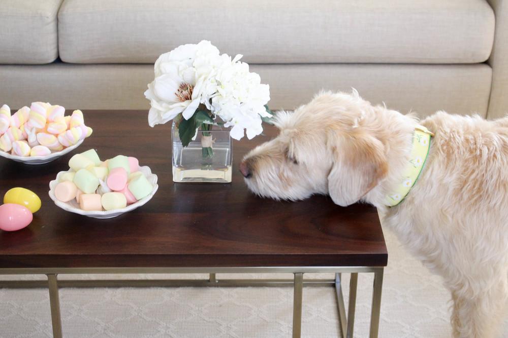 Paisley the Bunny