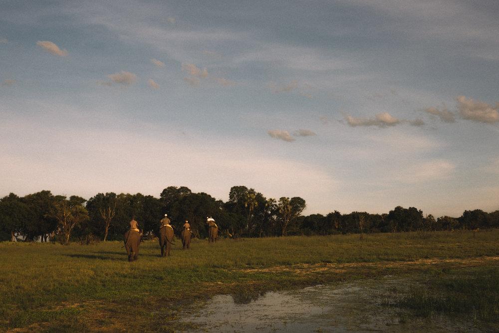 melissademata.com | Abu Camp Okavango Delta - Abu Herd African Bush Elephants
