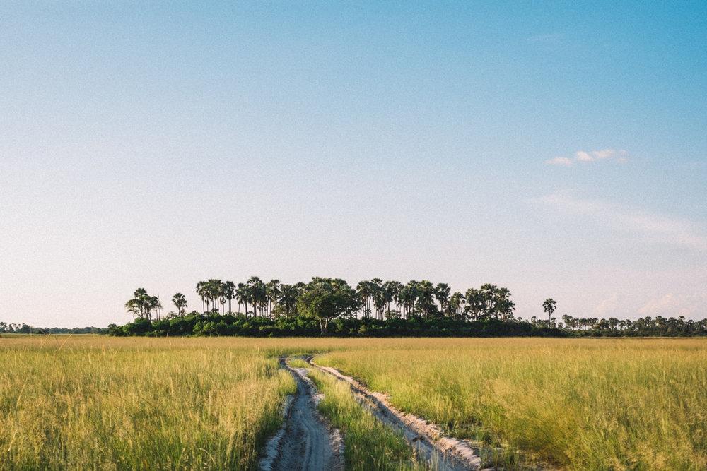 melissademata.com | Abu Camp Okavango Delta Botswana - African Bush Island