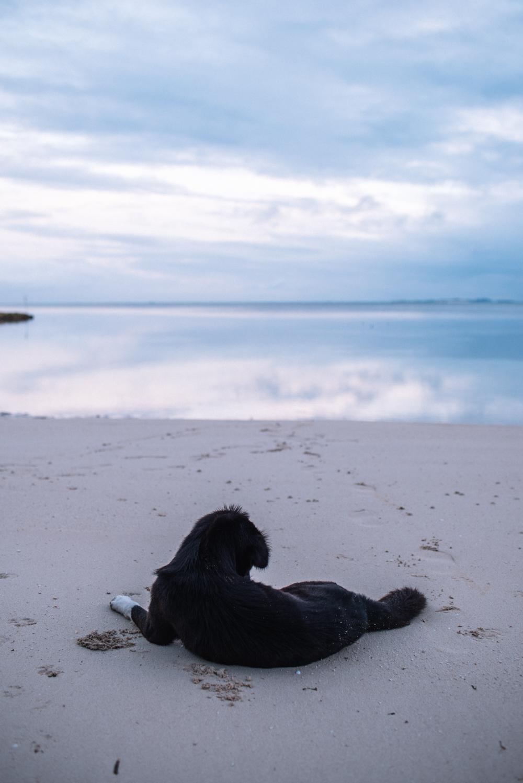 Malinao Beach -