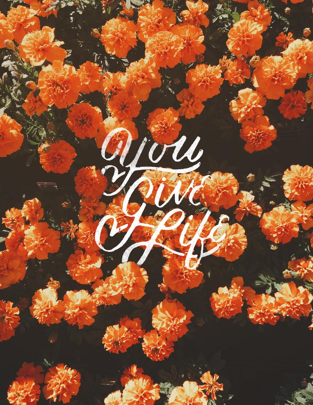 you give life.jpg
